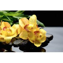 Cuadro A Personalizar - Orquídeas