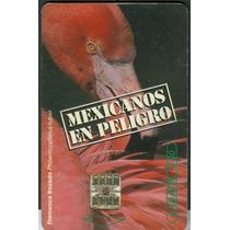 Tarj Flamingo Mexicanos En Peligro De Extincion