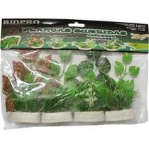 Plantas Terrario 10 Cm.c/4