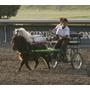Carretas Para Caballo Miniatura Mini Pony - Paquete A Meses