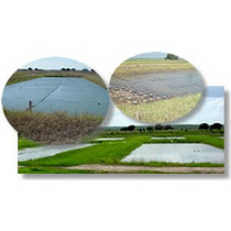 Gc Acuacultura-control De Algas (lagos Incubadoras Granjas)