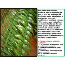 Planta Helecho Artificial , Arboles,palmas Vjr