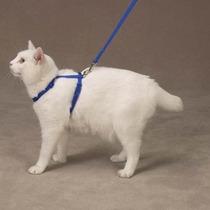 Arnes Para Gato Lead Nylon Cat Raspberry Sorbet