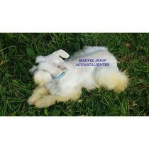 Cachorro Blanco De 6 Meses De Edad