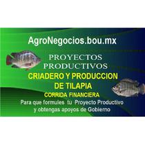 Inicia Negociot Tilapia Proyecto Productivo Corrida Financie