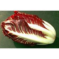 25 Semillas Radicchio Foliosum Vegetal Huerto Jardin Vbf