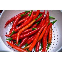 20 Semillas Chile Cayenne Picante Huerto Jardin Picoso Vbf