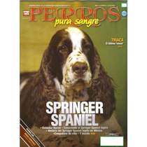 Revistas De Perros Pura Sangre Springer Spaniel Julio 2012