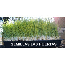 Wheat Grass Kit De Germinacion Para Crecer Pasto De Trigo.
