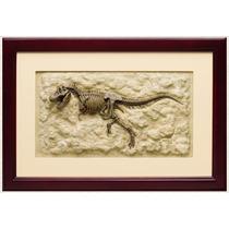 Dinosaurio Tiranosaurus Rex Esqueleto Enmarcado Fosil Hm4