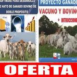 Sistema + Proyecto De Hato  Ganado Bovino Cria Ganaderia 63
