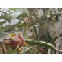 Pitahaya Pitaya Arbol Frutal Cactus 10 Esquejes Facil Enraiz