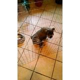 Jaula Corral Perros Gatos Conejos 60cm De Alto Con Techo
