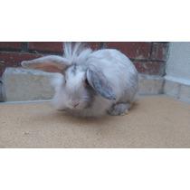 Venta De Conejos: Cabeza De Leon, Belier Y Lop