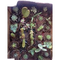 Cactus Y Suculentas Variadas Pequeñas Ventas Al Mayoreo