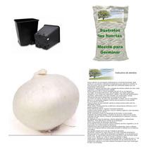10 Semillas De Cebolla Blanca En Kit Para Siembra Completo
