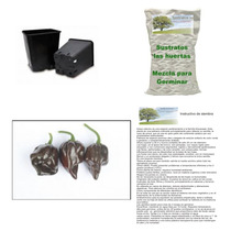 10 Semillas De Chile Habanero Chocolate En Kit Para Siembra