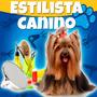 Estilista Canino Profesional Y Estetica Canina 2015 +videos