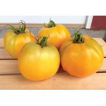 50 Semillas Tomate Jitomate Golden Jubilee Huerto Jardín