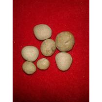 Amuleto Alfa Piedra Coyote