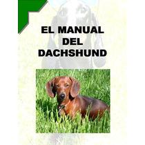 Manual Del Dachshund O Salchicha Conoce A Tu Amigo ¡ Au1