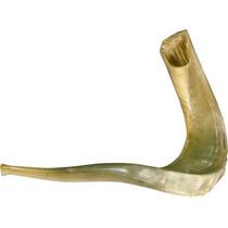 Shofar Extra Grande De Carnero (46 A 50 Cm) - Pulido