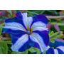 Semillas Petunia Plantas Jardin Flores Sustrato Envio Gratis
