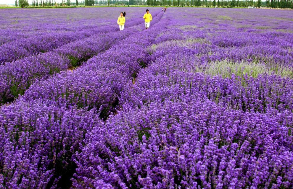 New days will come plantas de la prosperidad for Hierba jardin