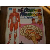 El Cuerpo Humano El Cerebro #11, Multilibro S.a.
