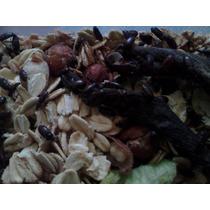 Gorgojos Chinos Medicinales