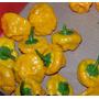 20 Semillas Jamaican Hot Yellow Chile Picante Ornamental