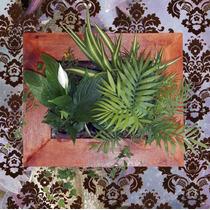 Cuadros Vivos Plantas Naturales Limpian Y Purifican El Aire