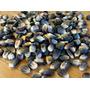 Semillas De Maiz Azul Autoctono - Zea Maiz Codigo 149-a