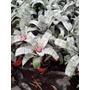 Planta Interior Bromelia Diferentes Variedades