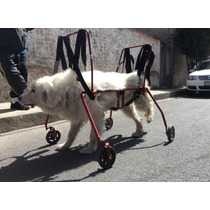 Carro 4 Llantas Perro Discapacitado Car-can Grande