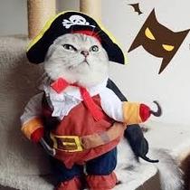 Disfraz Halloween Gato Pirata Perro Altura Al Cuello 32cm