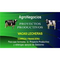 Vacas Inicia Negocio Proyecto Productivo Corrida Financier