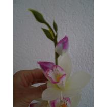 Orquídeas Selectas Baratas
