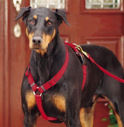 52792fd304b3 Arnes   Pechera Ajustable Para Perro Grande en venta en Ensenada ...