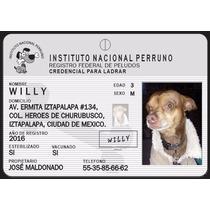 Plaquita Credencial Ine / Ife Para Perros