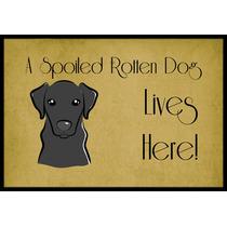 Labrador Negro Perro Estropeado Vive Aquí En Interiores O E