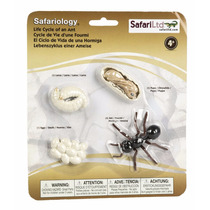 Safari El Ciclo De Vida De Una Hormiga Material Didactico