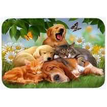 Golden Retriever, Labrador Corte Y Basset Hound Sleepy Heads