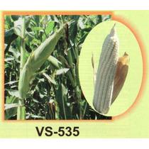 Maiz Vs 535 20kg Semilla Para Grano De Temporal