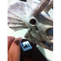 Dinosaurio Cráneo De Triceratop Escala 1 A 12