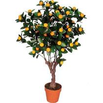 Árboles Frutales Ya Produciendo En Un Súper Precio