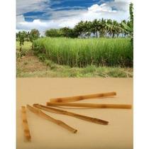 Caña De Azúcar En Bruto Swizzle Sticks - Pack De 20
