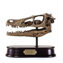 Dinosaurio Craneo Velociraptor Escala Real