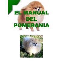 El Manual Del Pomerania + Regalos Conoce Atu Mejor Amigo Vmj
