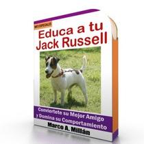 Como Educar A Un Jack Russell - Guía De Adiestramiento